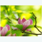 цветы 531