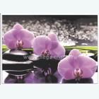 орхидеи 505 3300 руб. за 1м кв.